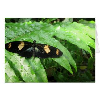 Mariposas tropicales tarjeta de felicitación