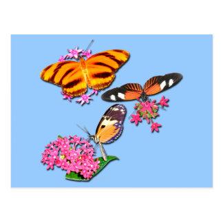 Mariposas tropicales tarjeta postal