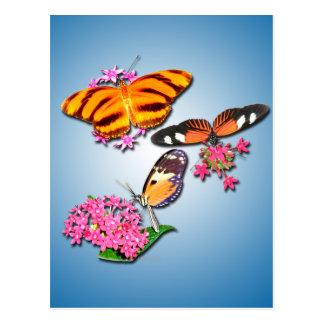 Mariposas tropicales tarjetas postales