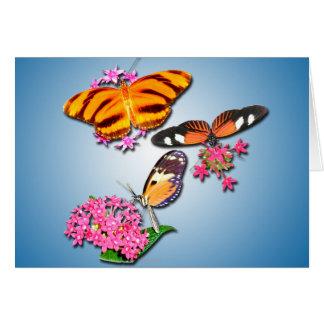 Mariposas tropicales tarjeton