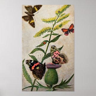 Mariposas y cardo posters