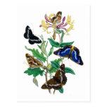 Mariposas y madreselvas postal