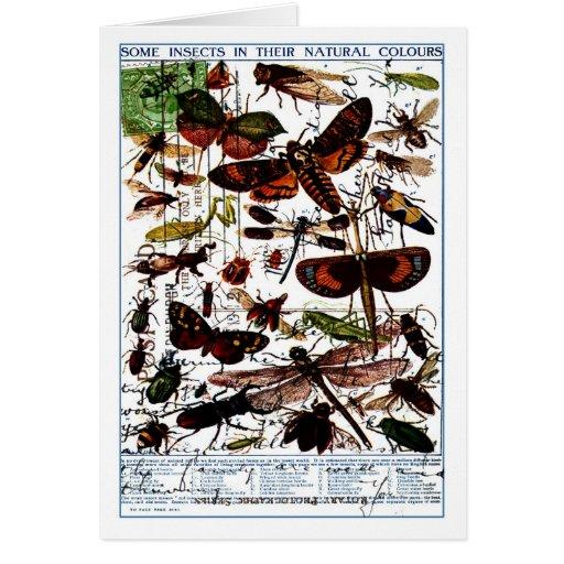 Mariposas y polillas tarjeta de felicitación