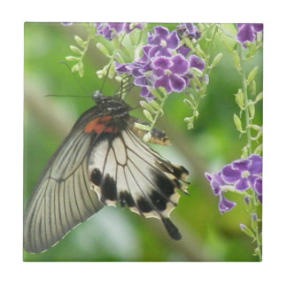 Mariposas y teja de las flores