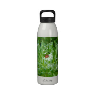 Mariquita en gota de rocío en Succulent verde Botella De Beber