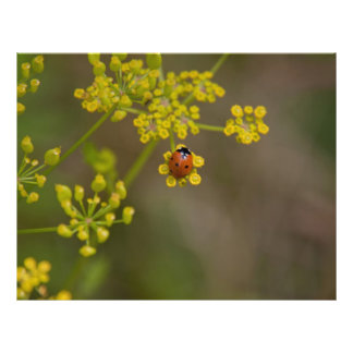 Mariquita en la flor amarilla tarjetas publicitarias