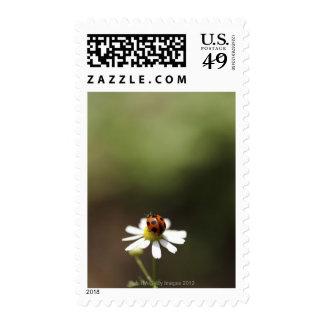 Mariquita en la flor de la manzanilla franqueo
