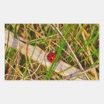 Mariquita en la imagen de la hierba