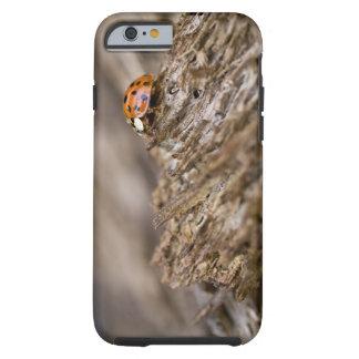 Mariquita en la madera vieja, pen¢ascos de funda para iPhone 6 tough