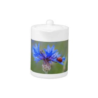Mariquita en un cornflower azul