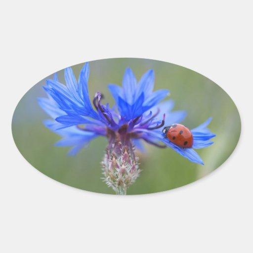 Mariquita en un cornflower azul pegatina ovalada