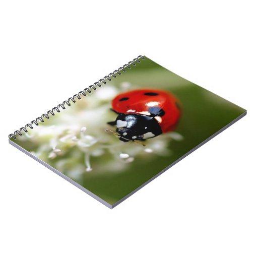 Mariquita en una flor blanca libro de apuntes con espiral