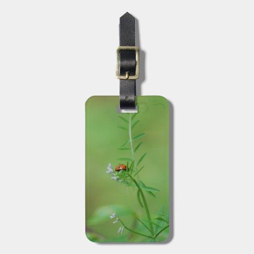 Mariquita en verde etiquetas para maletas