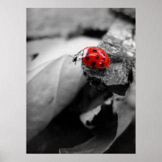 Mariquita/escarabajo Impresiones