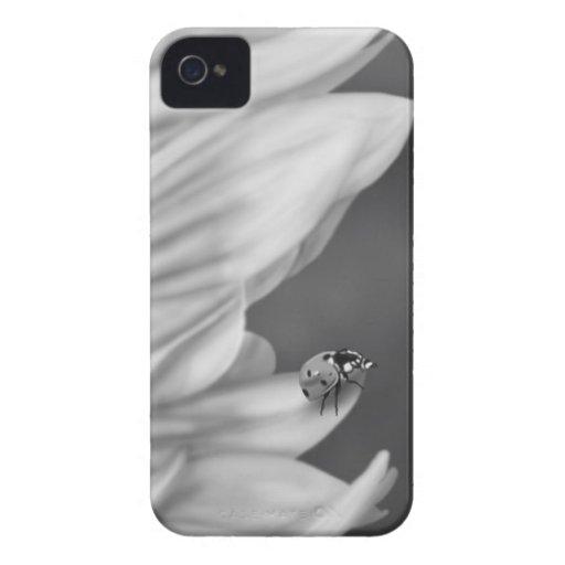 Mariquita iPhone 4 Carcasas