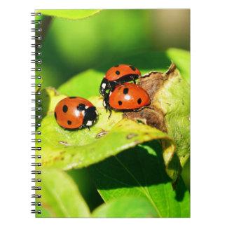 Mariquita Cuadernos