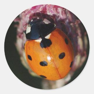 Mariquita - pegatinas de señora escarabajos etiquetas redondas