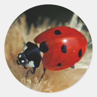 Mariquita - pegatinas de señora escarabajos etiqueta redonda