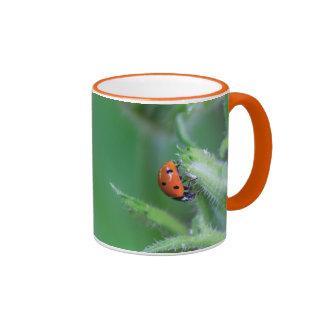 Mariquita que come la taza de café