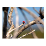 Mariquita que descansa sobre tronco del árbol tarjetas postales