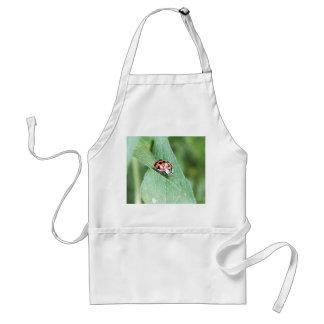 Mariquita roja en una hoja verde delantal