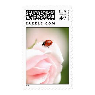 Mariquita Timbre Postal