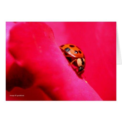 Mariquita y el color de rosa felicitación