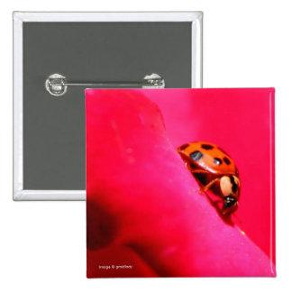 Mariquita y el color de rosa pin