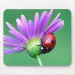 Mariquita y flor púrpura alfombrilla de ratón