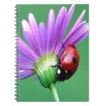 Mariquita y flor púrpura libros de apuntes con espiral