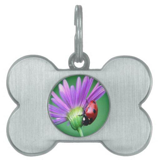 Mariquita y flor púrpura placas de mascota