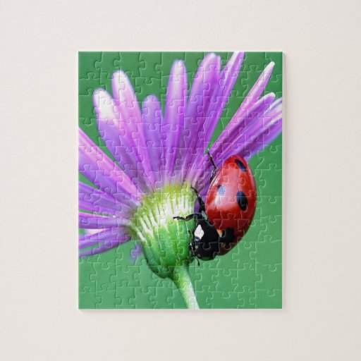 Mariquita y flor púrpura rompecabeza con fotos