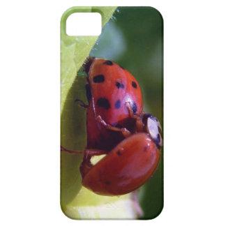 Mariquitas que consiguen el caso ocupado del iPhon iPhone 5 Cárcasa