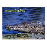 Marismas del cocodrilo americano tarjetas postales