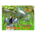 Marismas parque nacional, la Florida Postal