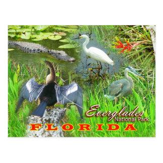 Marismas parque nacional, la Florida Tarjeta Postal