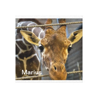 Marius Brilliant Wall Canvas
