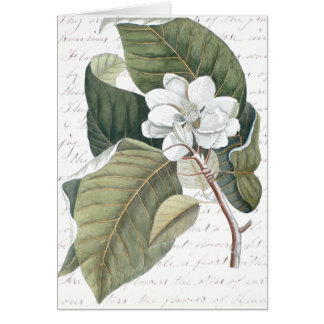 Mark Catesby Magnolia Collage w/ Essay on Flowers Greeting Card