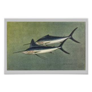 Marlin or Spearfish Vintage Fish Print Photo Print