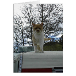 Marmalade Cat Standing on Camper Top Card