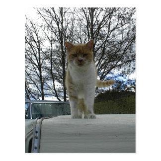 Marmalade Cat Standing On Camper Top Postcard
