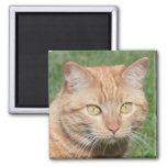 Marmalady in the Sun 2 Inch Square Magnet