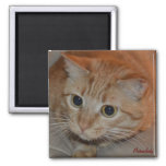 Marmalady Wide-Eyed 2 Inch Square Magnet