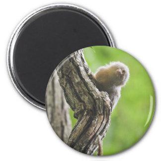 Marmoset enano imán redondo 5 cm