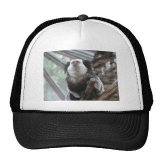 Marmoset Trucker Hat