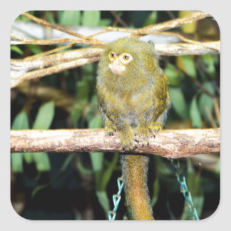 Marmoset Monkey Sitting On A Branch, Square Sticker