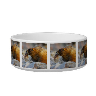 marmot and baby bowl