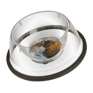 marmot and baby pet bowl