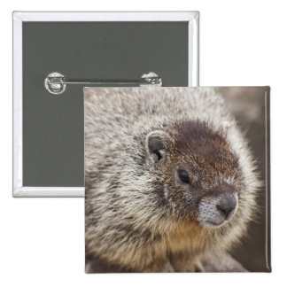 Marmot at Palouse Falls State Park Pinback Button