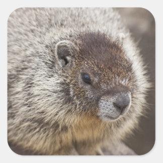 Marmot at Palouse Falls State Park Square Stickers